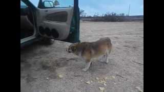 Собака и чипсы.
