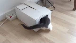 Оk google Кошки и Котики. Приколы. Подборка