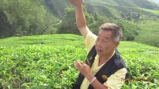 Cameron Highlands  - Boh  Tea Plantation - Gunung Bringchang - Mossy Forest