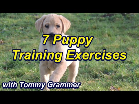 First things to teach your puppy