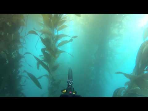 Spearfishing San Diego