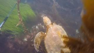 La Jolla Sea Life!
