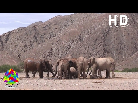 Africa's Namibia Roadtrip & Adventures (Episodes 100-111)
