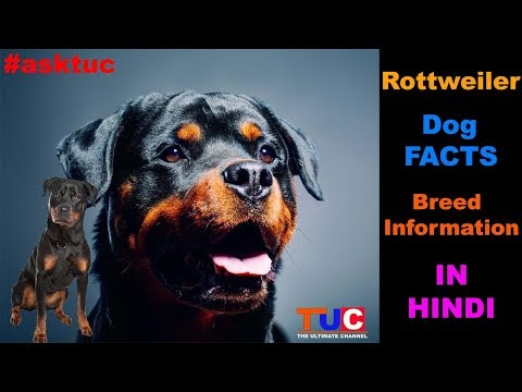 Rottweiler Dog Facts In Hindi : Popular Dogs : TUC : The Ultimate Channel