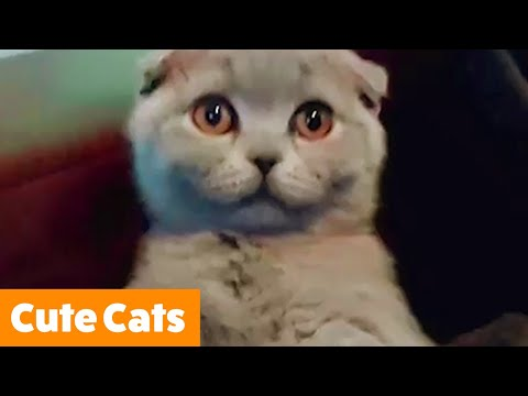 Adorable Funny Cats | Funny Pet Videos