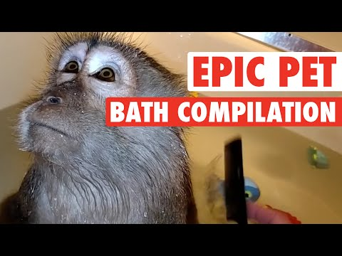 Epic Pet Baths (Adorably Hilarious Compilation)