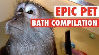 Epic Pet Baths (Adorably Hilarious Compilation)