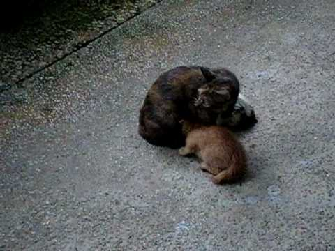 Youtube Of Mother Cat Protecting Her Kittens
