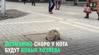 Кот-хатико в Белгороде ждет хозяев на одном и том же месте каждый день уже целый год.