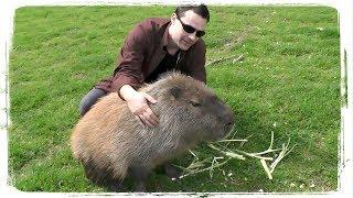 ТОП ПРИКОЛЫ С ЖИВОТНЫМИ | TOP FUN WITH ANIMALS #539