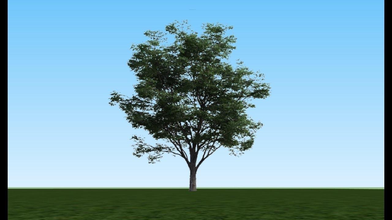 Google Sketchup Tutorial: 2D Tree