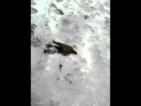 DEAD BIRD IN MY GRANDMAS BACK YARD