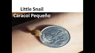 A #snail is a small animal with a long, soft body, no legs, and a s...