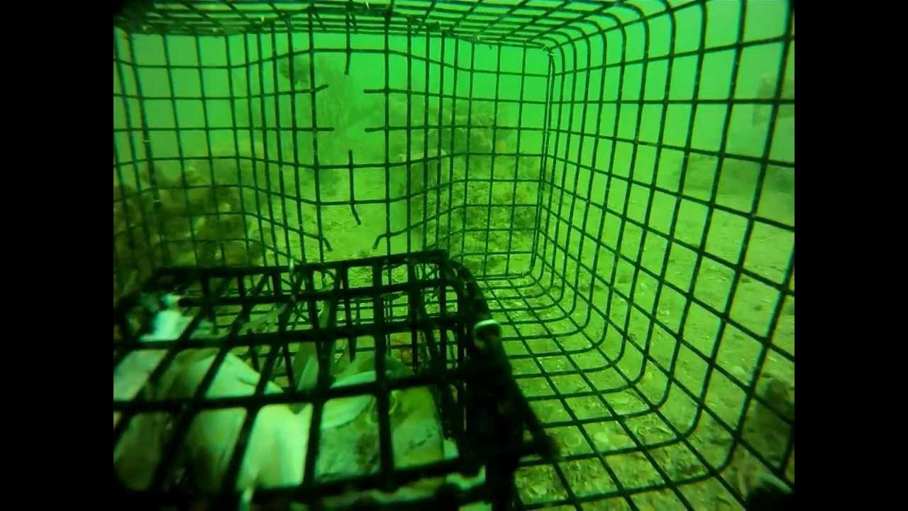 схема простой приманки для рыбы 12в