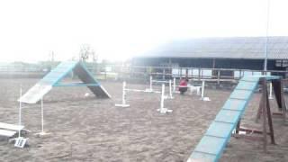 Deaf Dog Agility Training 25/01/09 Run 2