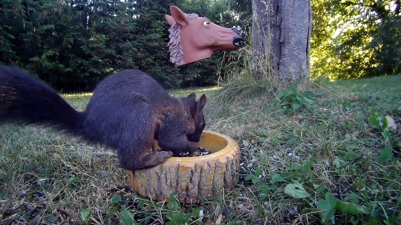 Squirrel and Horse Head - July 13, 2020