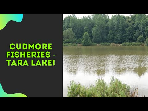 Carp Fishing At Cudmore Fisheries |  Session 3 | 2019