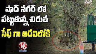 Leopard Caught In Shad Nagar, Released In Amrabad Tiger Reserve   Telugu News
