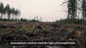 Avohakkuut jyräävät metsämme