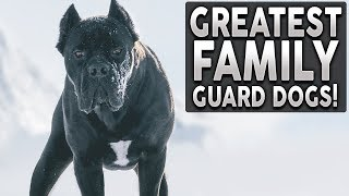 The BEST Family Guard Dog Breed In The World! RANKED TIER LIST!