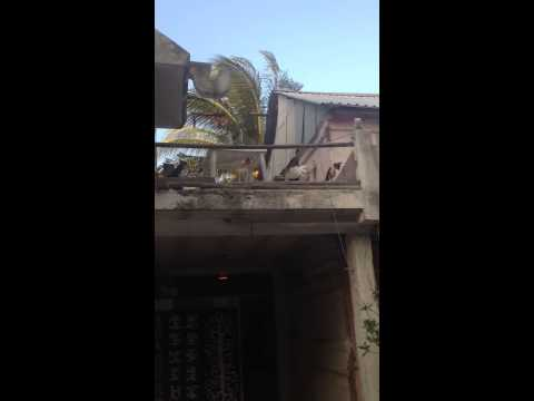 Dogs barking in Mexico