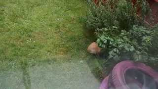 Белка  гоняет кота!!!