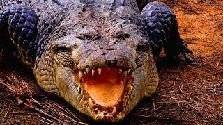 Атака нильского крокодила   Документальный фильм про крокодила 2015