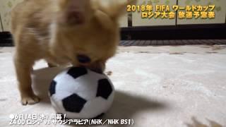 【放送予定表・番組表】 2018年 FIFA ワールドカップサッカー ロシア大会 W杯