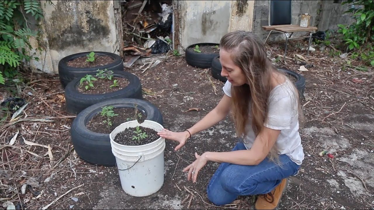 Self-Watering 5-Gallon Bucket Gardens, Benches and Bad News | The Survival  Gardener