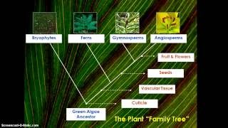 How did plants Evolve?