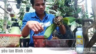 Kỹ thuật trồng và chăm sóc lan Hồ Điệp / thay chậu