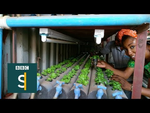 Nigeria's soil-free salad factory - BBC Stories