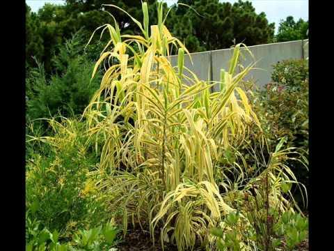 COOL PLANT PROFILES 29
