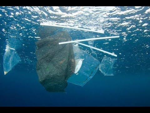 Plástico nos oceanos: O que fazer para não poluir