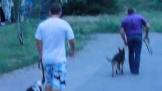 Дрессировка собак Донецк, Макеевка