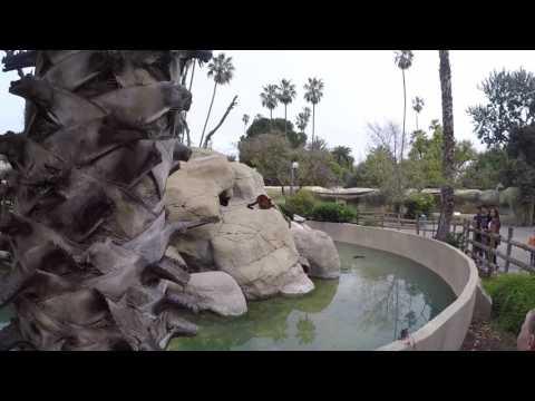"""Zoo Day"" Fresno Chaffee Zoo"