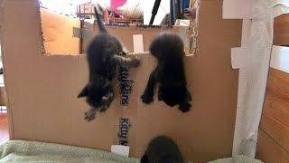 The Great Kitten Escape