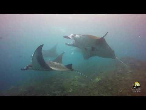 diving-with-manta-rays-at-bali's-manta-point-(plongée-raies-manta)