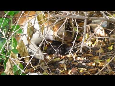 Divokej Bill - Vodrhovačka (official audio) from YouTube · Duration:  2 minutes 52 seconds