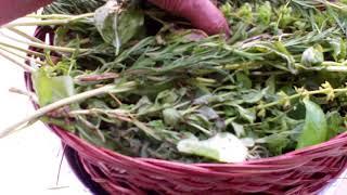Prepare & Preserve Your Seasoning