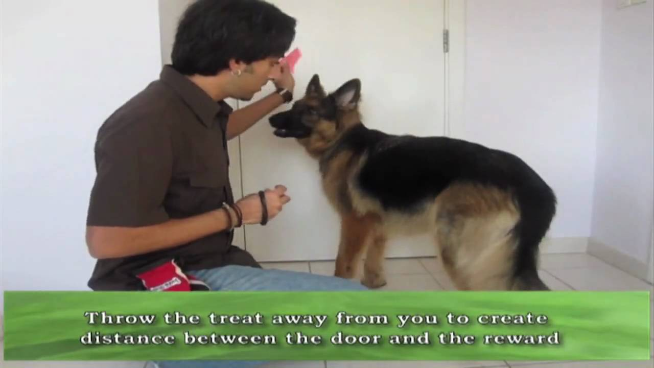 how to teach your dog to whisper