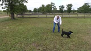 Three Phases of the Fetch 'Game' using The Bill Hillmann DVDs