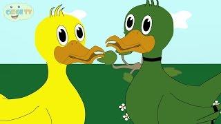 çOCUK ŞARKILARI - ördek Rondu - çizge TV - çizgi Film İzle