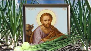 5 мая - в Луков день разрежьте луковицу и скажи...