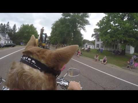 Australian Cattle Dog Harley Rose riding motorcycle in 4th of July Parade