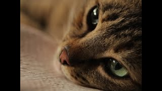 Cats and humans: a purr-fect relationship