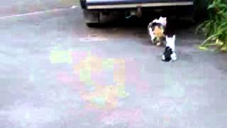 Кошка з котёнком