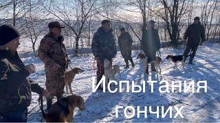 Фото испытания гончих по пушному зверю в Черновицкой обл. 06.03.2021
