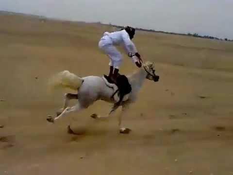Arabian horse and the Saudi man