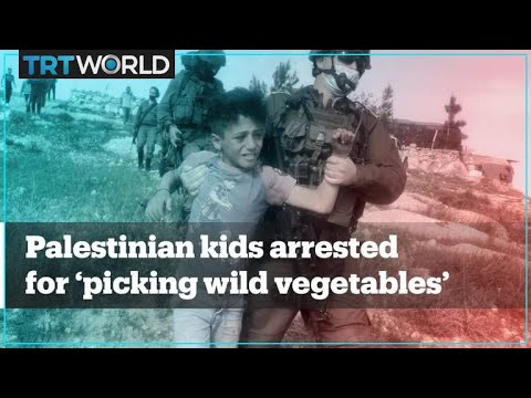 Israeli Soldiers Arrest Palestinian Kids For 'picking Wild Vegetables'